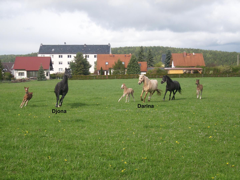 Djona + Golden Darina mit ihren Fohlen 2014