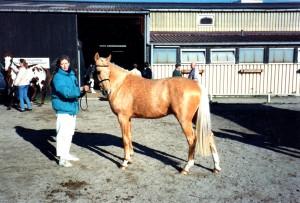 darino-gold-1994022